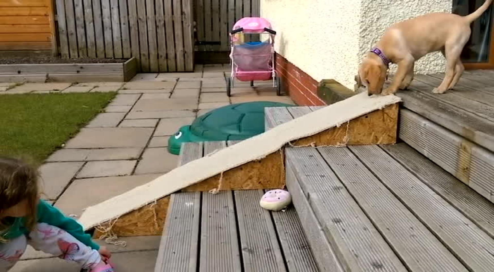Puppy Slides down Hardwood Floors | Jukin Media Inc