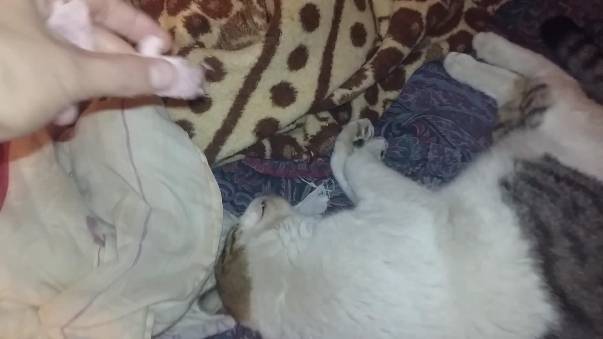 Cat Viciously Attacks Sleeping Dog | Jukin Media