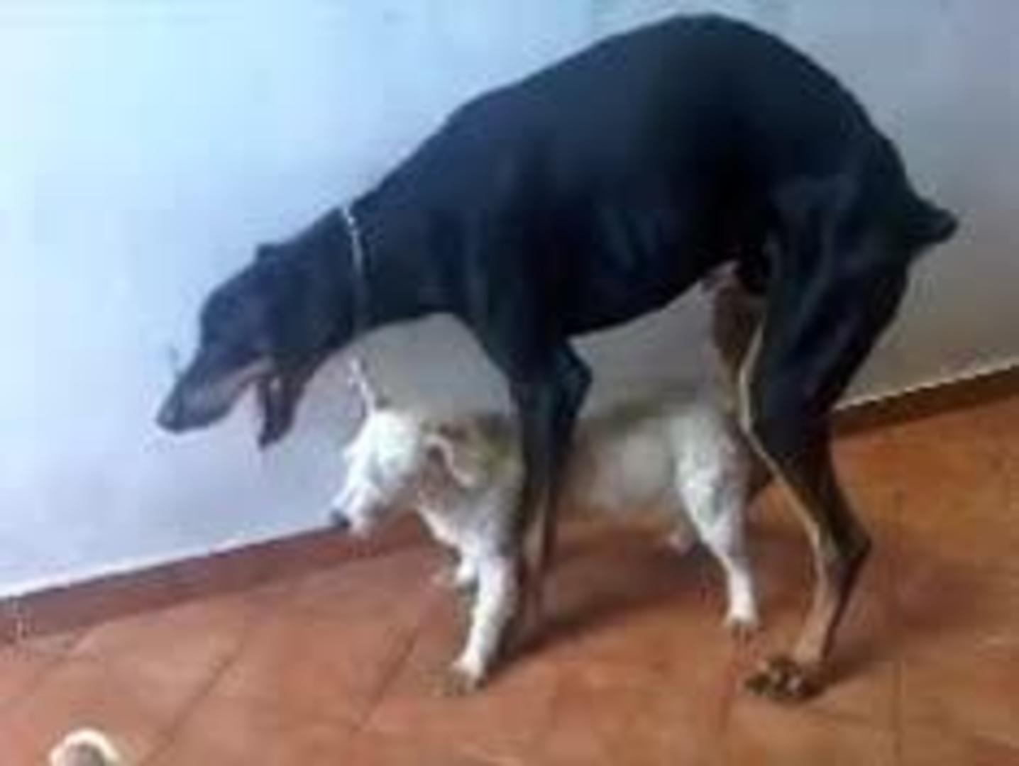 Wildrose Kennels - Adventure Dogs
