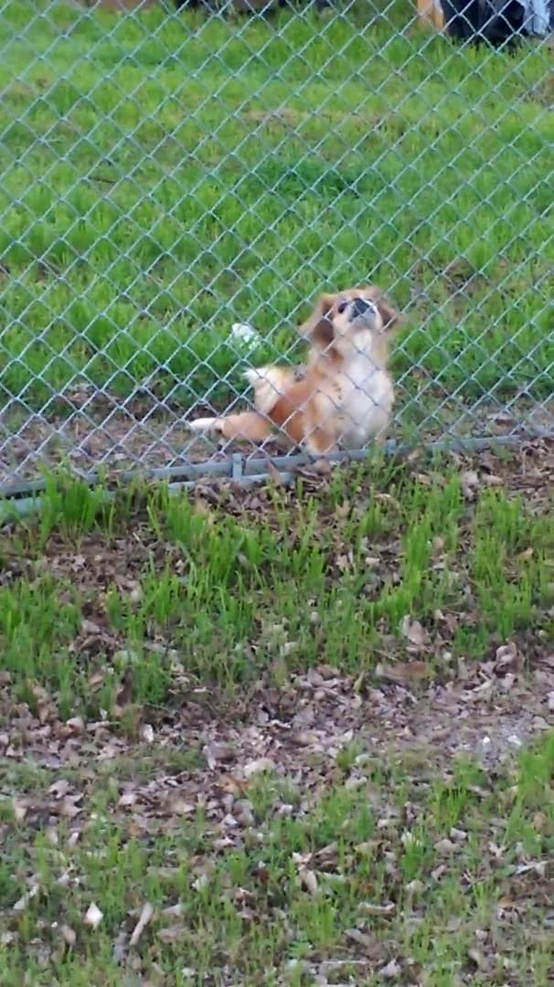 Dog Peeks Through Hole in the Wall | Jukin Media Inc
