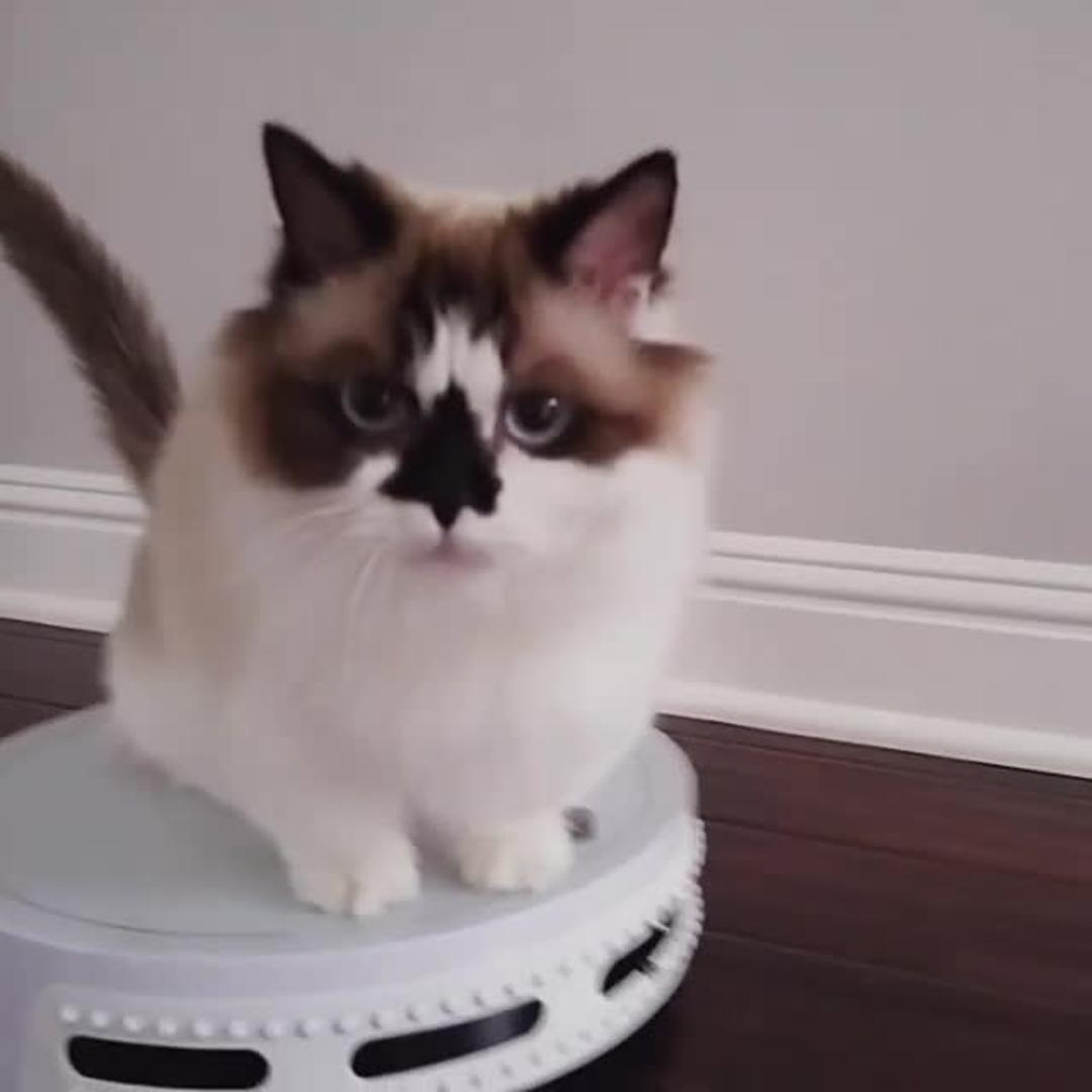 Cat Holds onto Side of Robotic Vacuum Cleaner | Jukin Media Inc