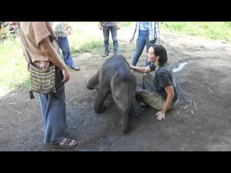Baby Elephant Chases Birds Jukin Media Inc