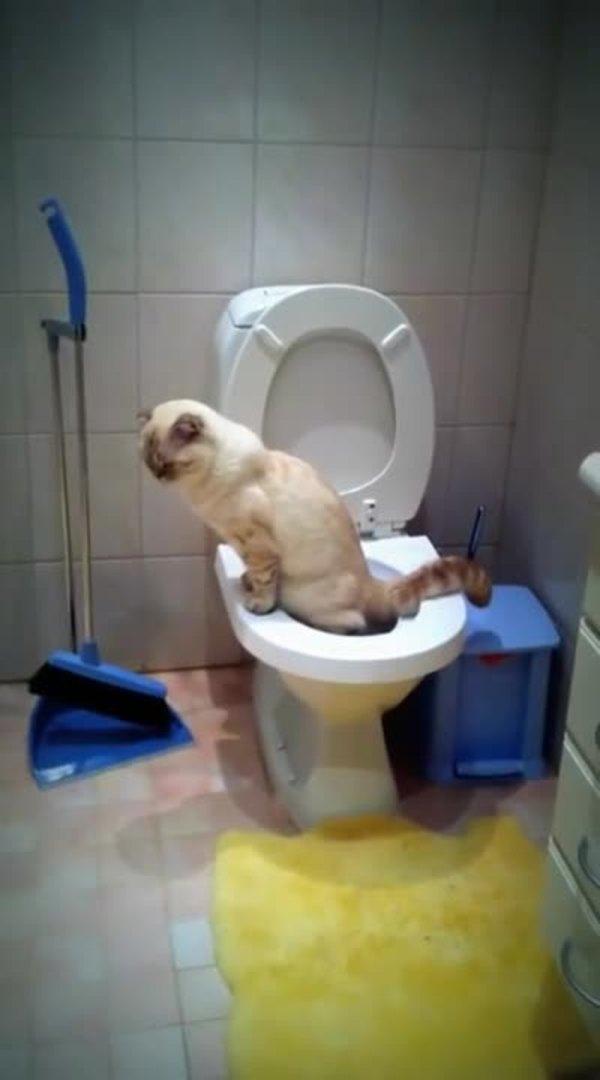 cat lying on back behaviour