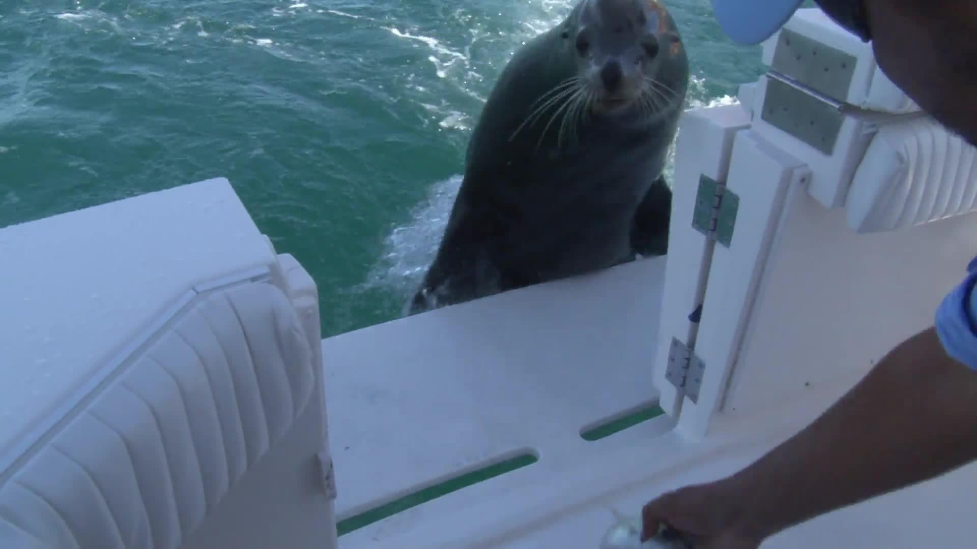 Sea Lion Grabs Big Fish | Jukin Media Inc