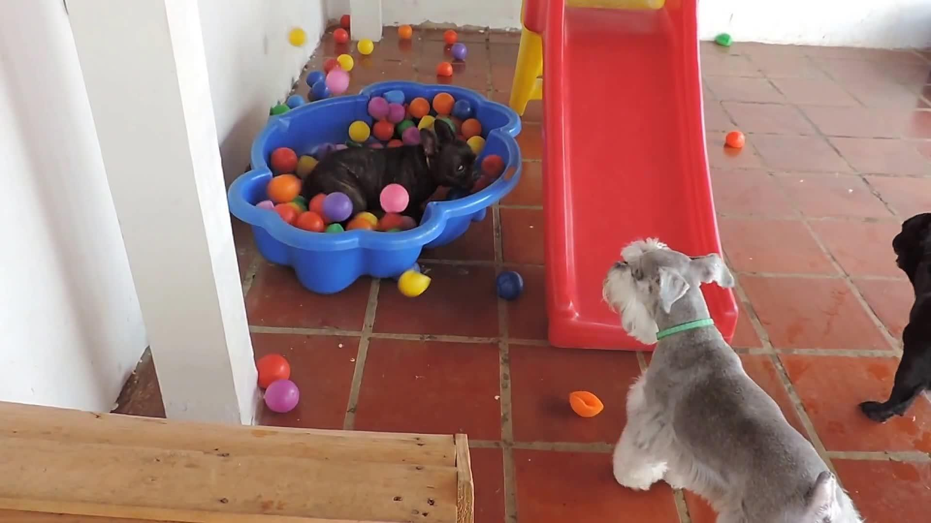 Best Bulldog Ball Adorable Dog - thumbnail-1469770646096  Photograph_32525  .jpg