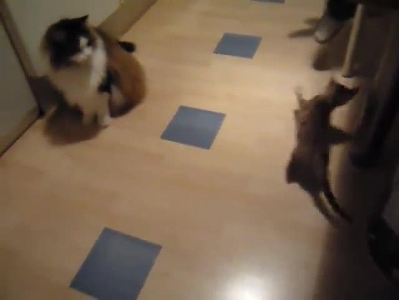 Big Cat Vs Little Cat