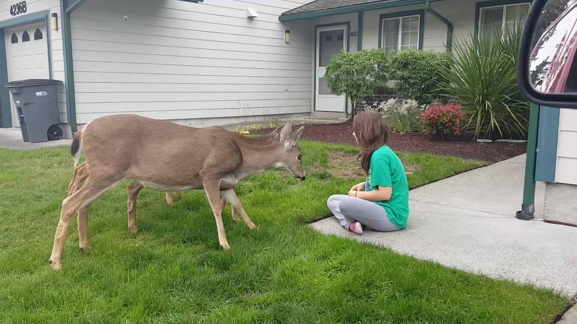 people pet a deer through a fence jukin media