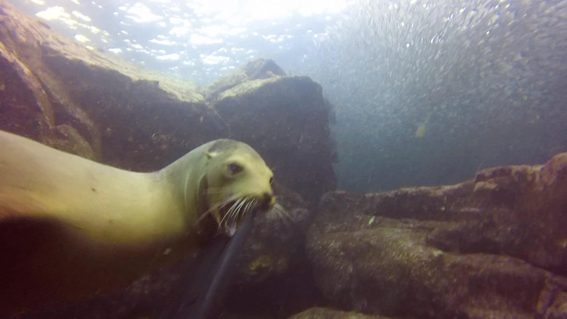 Sea Lion Drags Girl Into Water | Jukin Media Inc