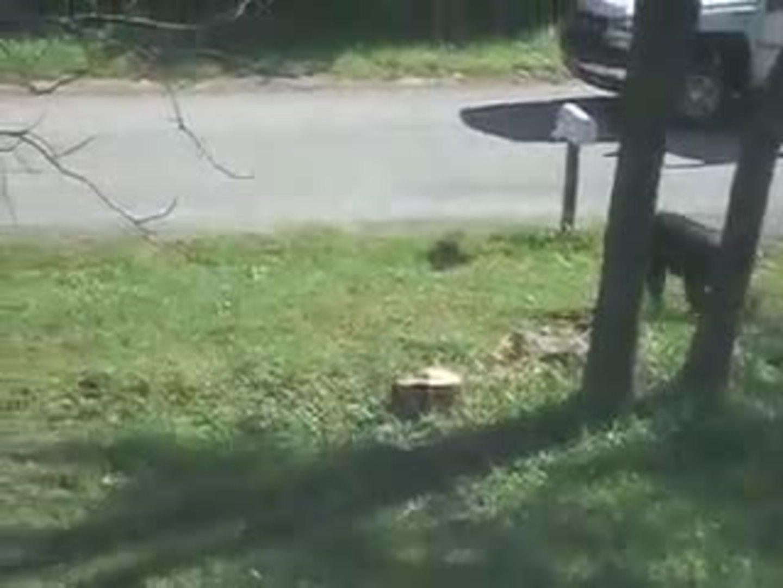 dog escapes through window jukin media