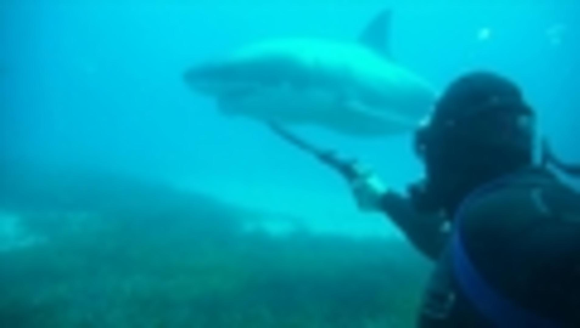 rare large shark sighting while scuba - HD 1906×1080