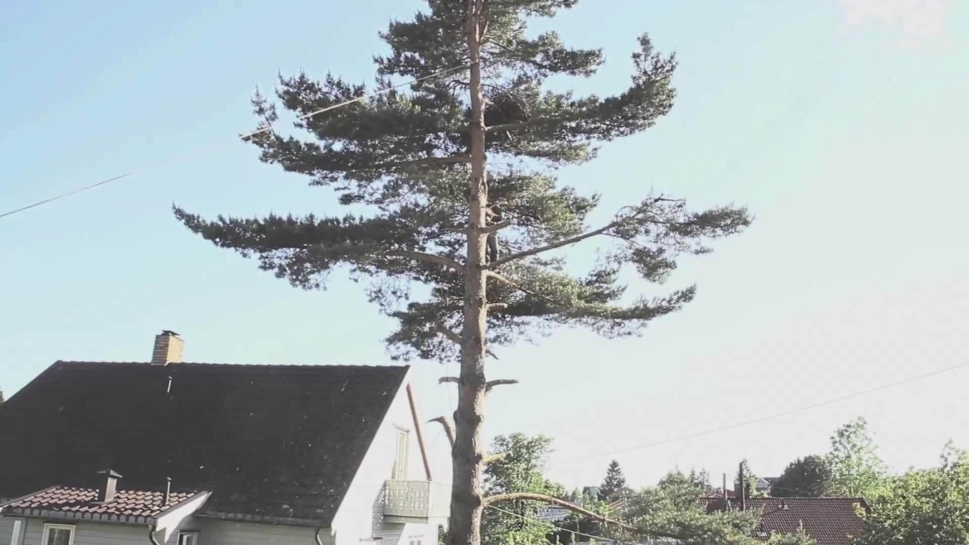 Chopped Down Tree Lands on Shed Roof | Jukin Media Inc
