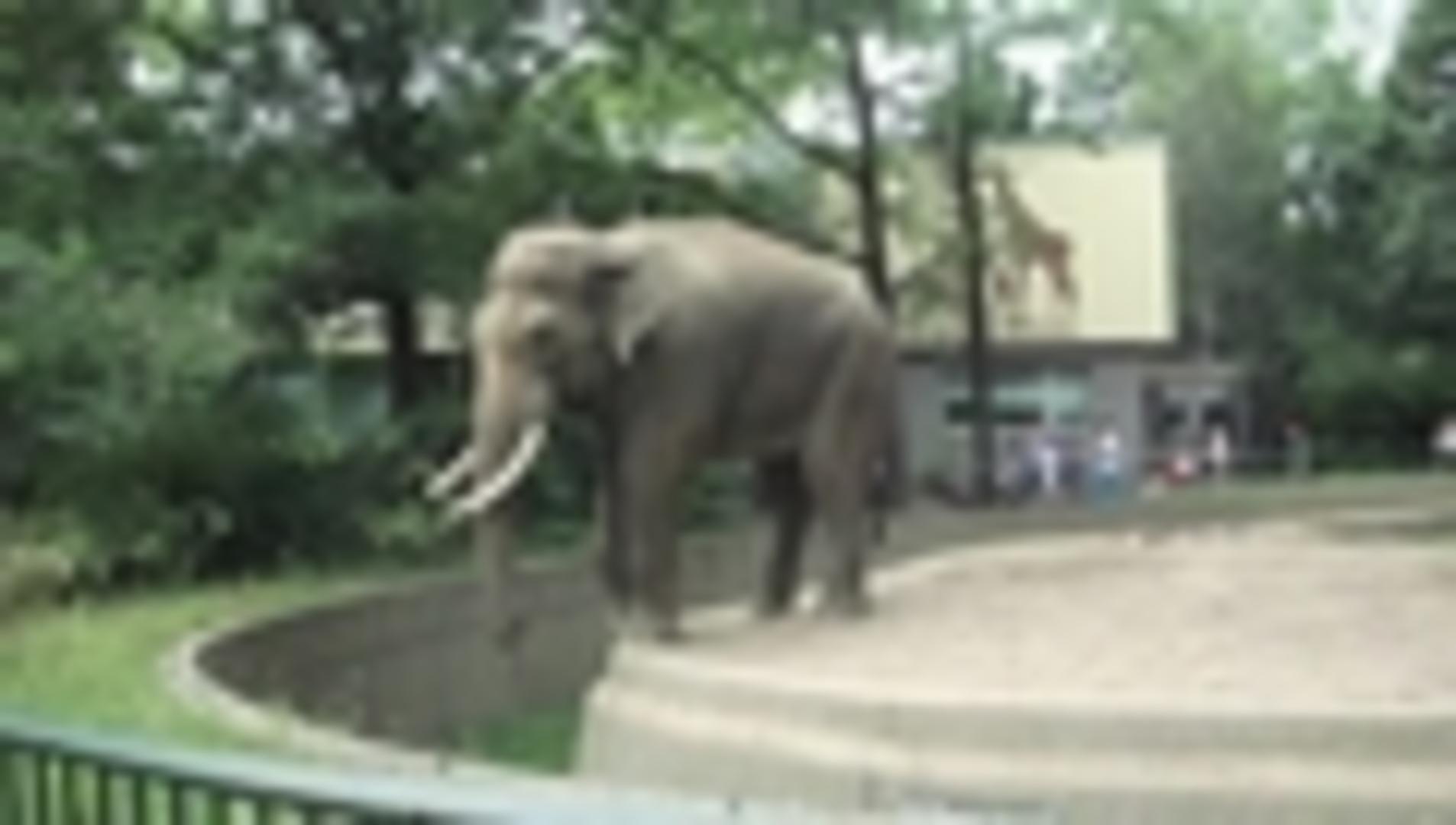 Gorilla Throws Poop At Spectators Jukin Media Inc