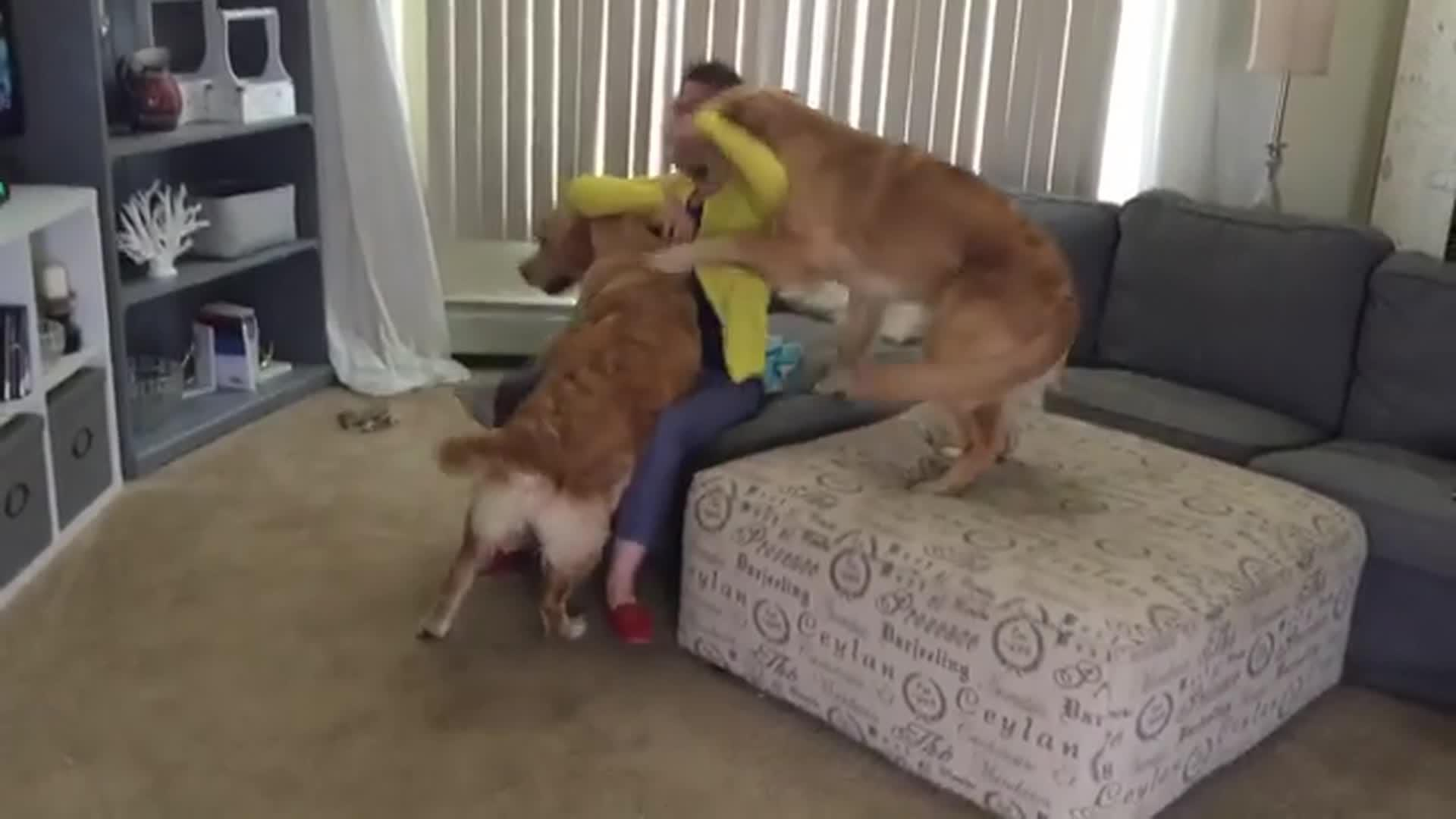 Dogs Excited To See Owner Come Home Jukin Media