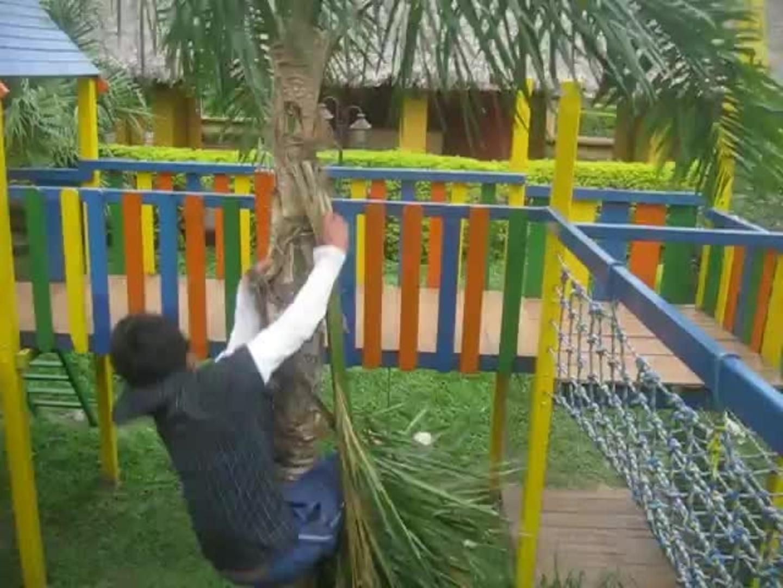 parkour tree faceplant jukin media