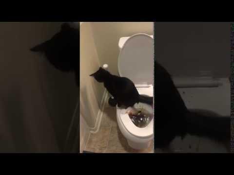 Cat Poops In Toilet