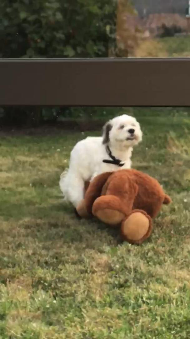 Puppy Humps Stuffed Animal Jukin Media Inc