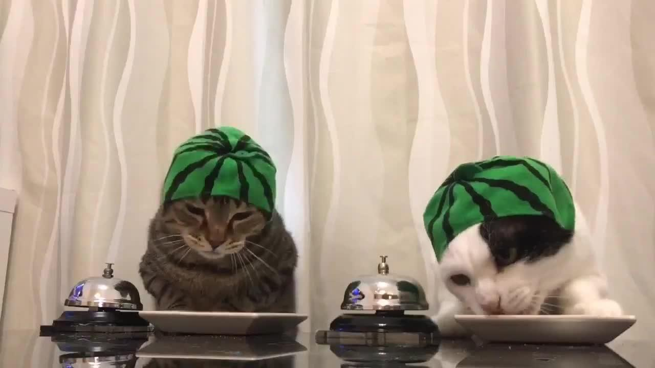 Cats In Bunny Ears Ring Bells For Food Jukin Media Inc