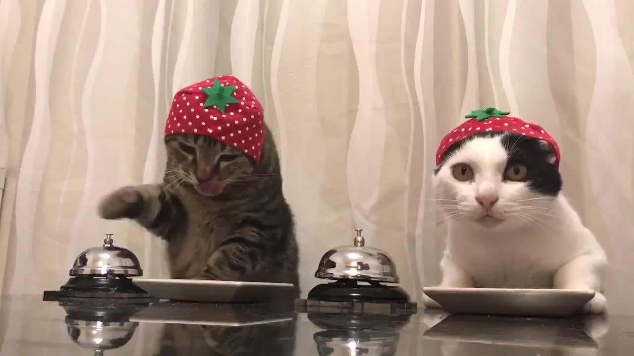 Cats Wearing Orange Hats Ring Bells For Food Jukin Media Inc