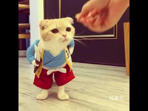 & Cat Eats Snacks While Wearing Costume   Jukin Media