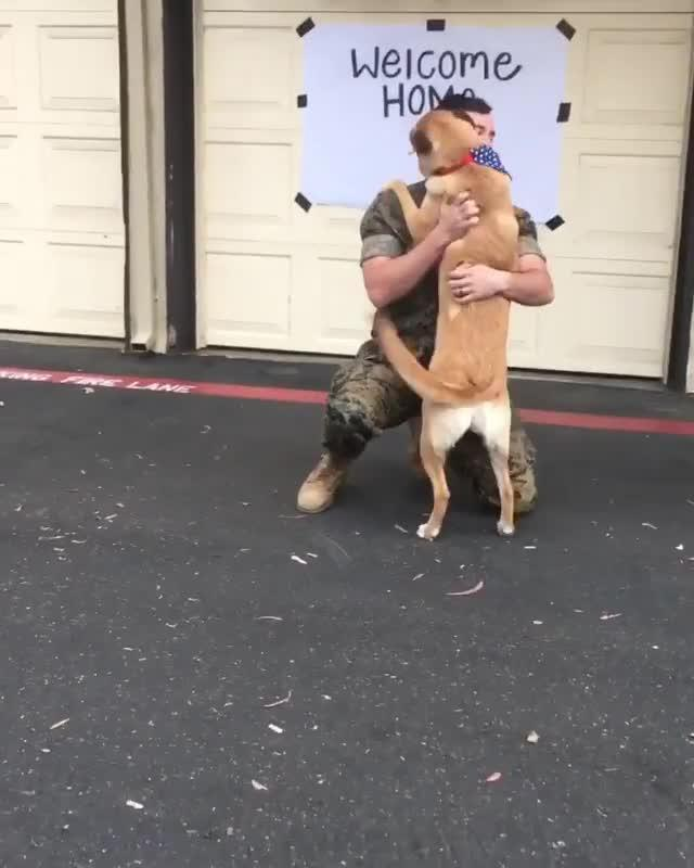 dog happy to see owner