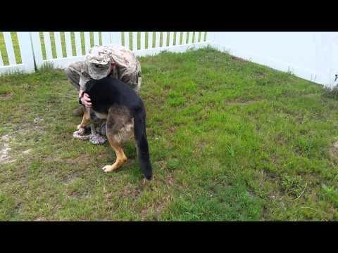 German shepherd welcomes home soldier jukin media soldier reunites with german shepherd after seven month deployment m4hsunfo