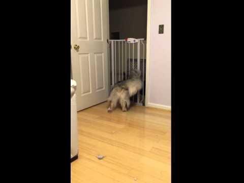 Cat squeezes through sliding glass door jukin media large dog escapes through cat door planetlyrics Images