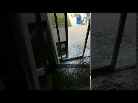 Dog Crashes Through Glass Door & Dog Humps Chew Toy | Jukin Media