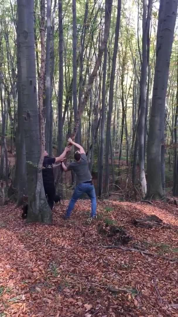 Guy Gets Hit in Face with Branch Breaking Down Tall Tree