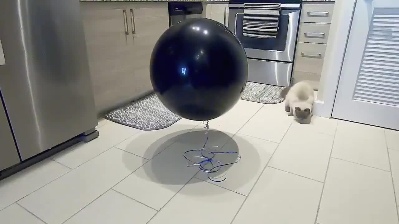 Dog Sends Gender Reveal Balloon Floating Into Sky | Jukin