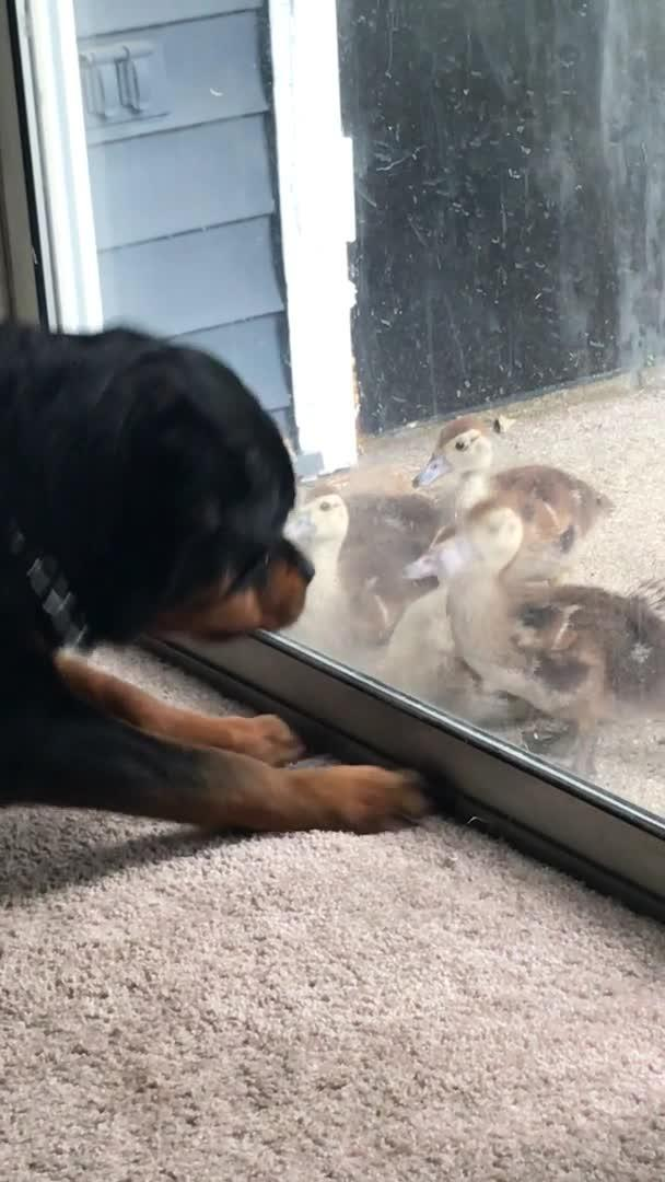 Dog Crashes Through Glass Door Jukin Media Inc